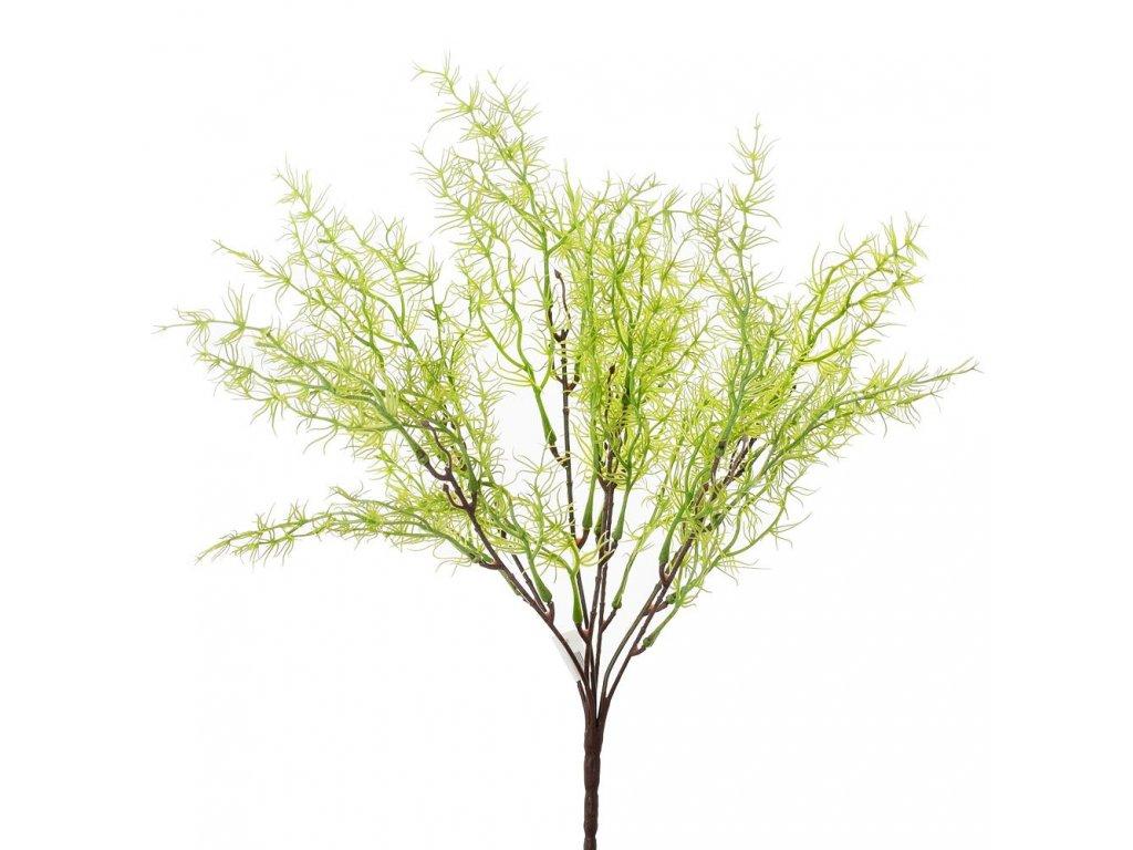 Zápich asparagus bledý 30cm