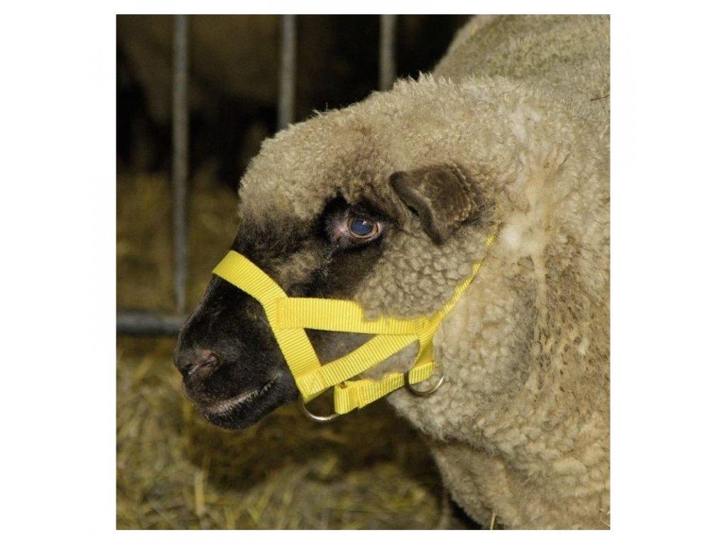 Ohlávka pro ovce a berany, kožená
