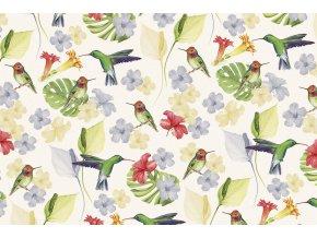 1528 colibrì T