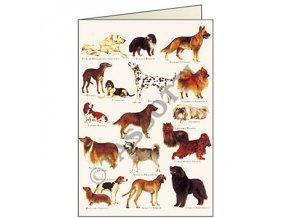Blahopřání Psi