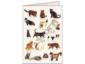 Blahopřání Kočky
