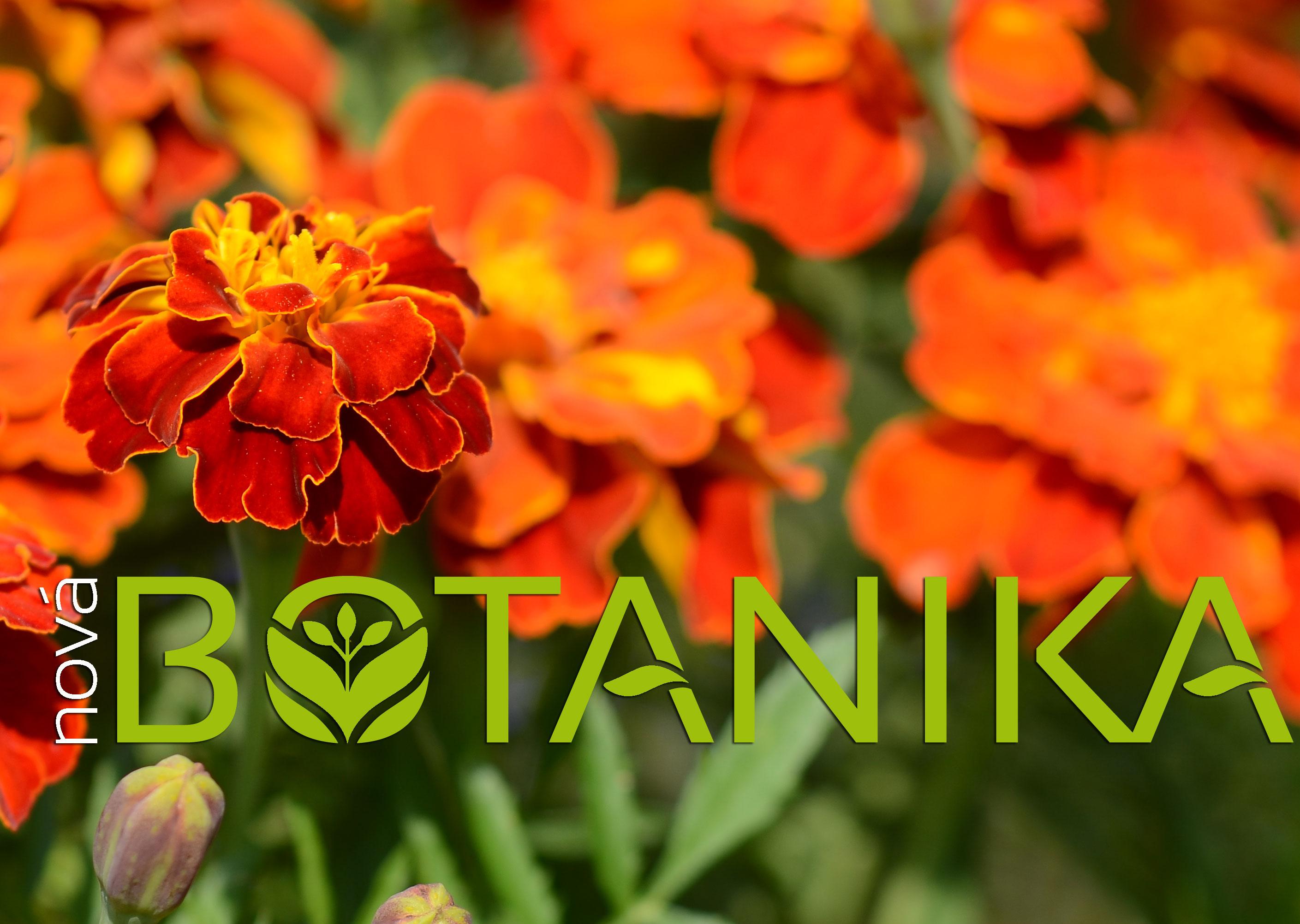 Časopis Nová Botanika