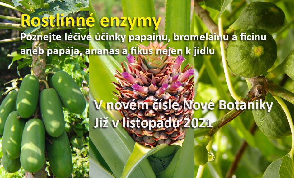 Papája, ananas a fíkus
