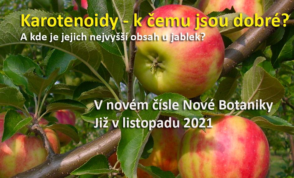 Karotenoidy u jablek