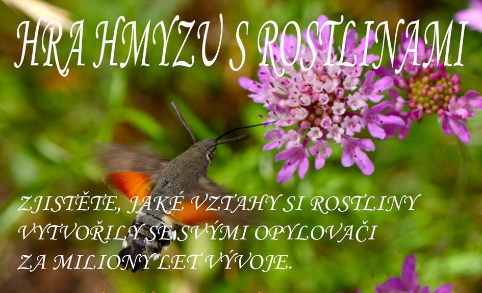 Hra hmyzu s rostlinami