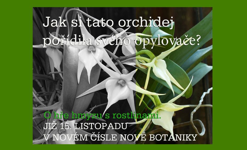 Jak si tato orchidej pořídila svého opylovače?