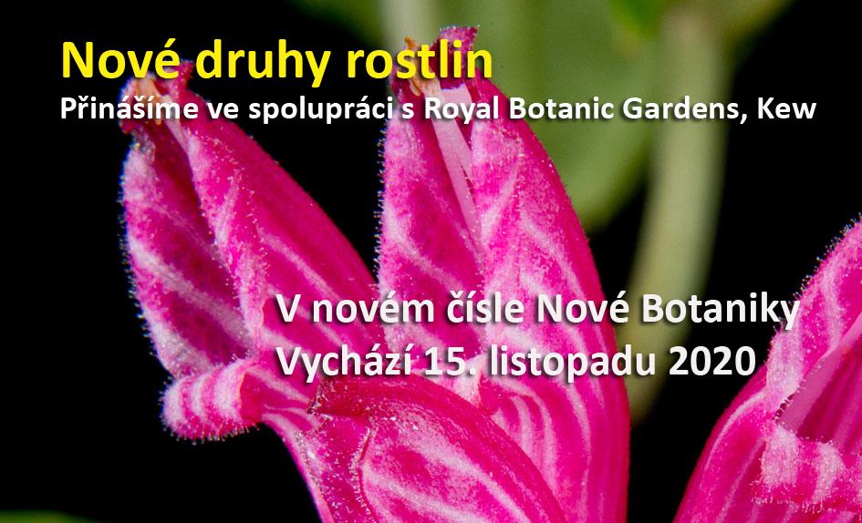 Nové druhy rostlin