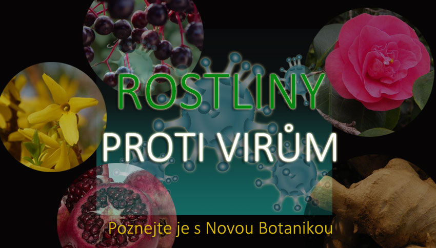 Rostliny proti virům