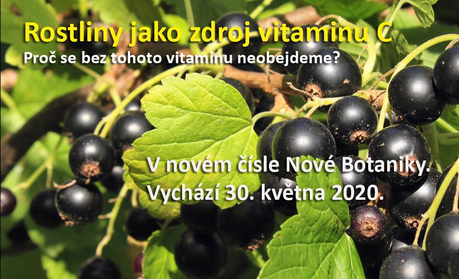 Rostliny jako zdroj vitaminu C