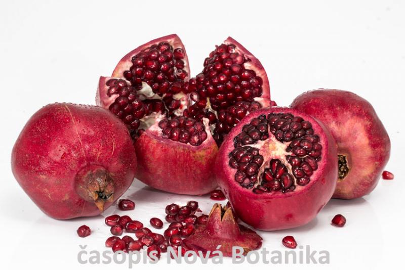 granátové-jablko
