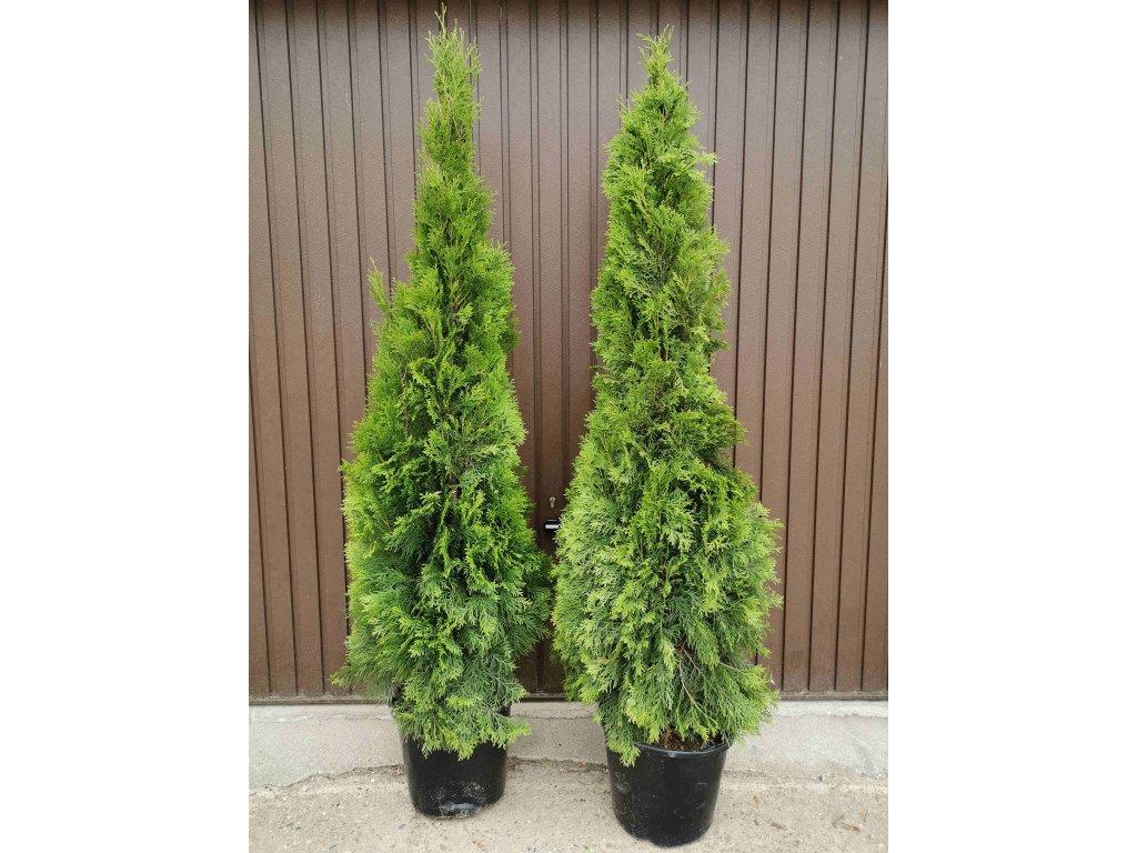multiflora thuje smaragd 160 180cm