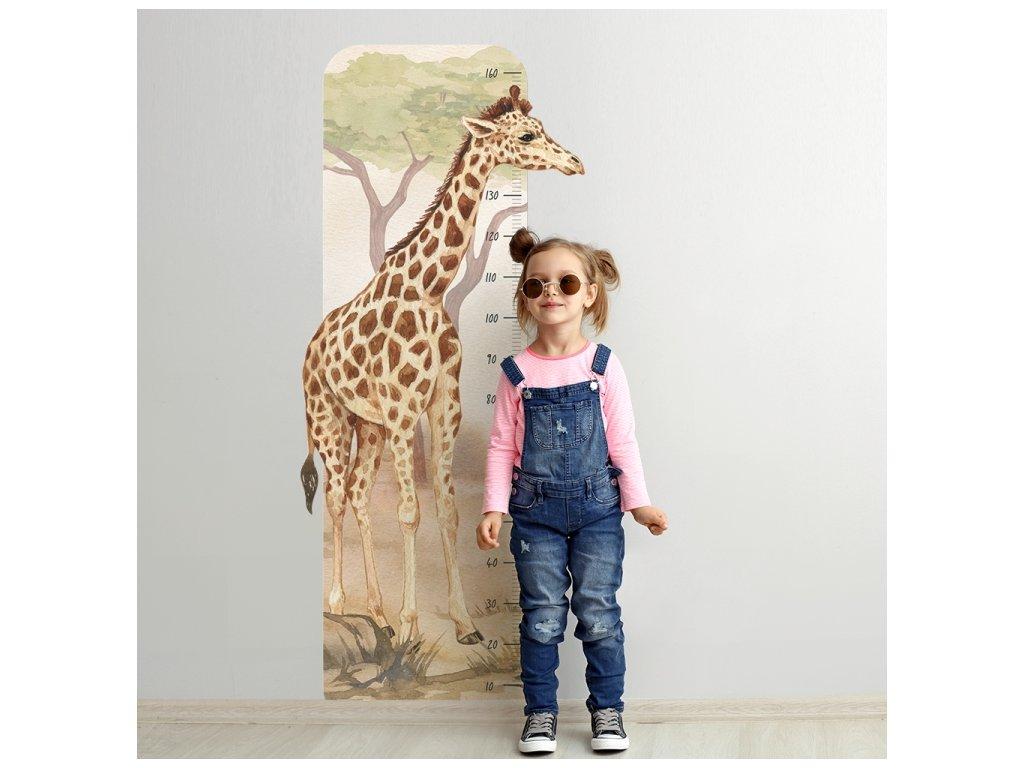 metr žirafa