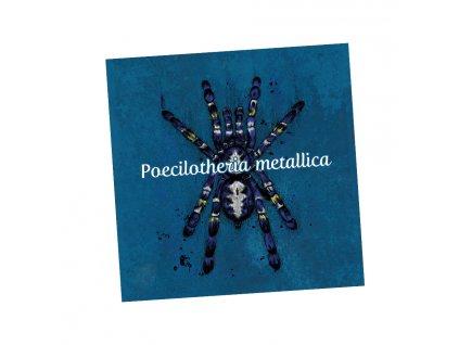 Magnetka Poecilotheria metallica