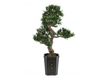 Bonsai, 80cm