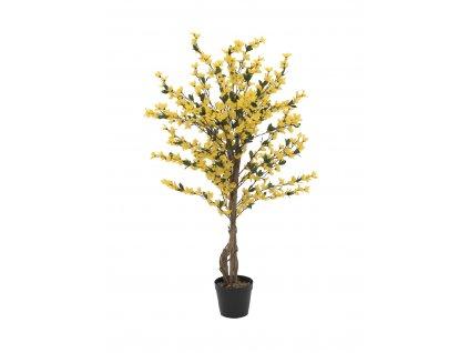 Forsythia se 4 kmeny, žlutá, 120 cm