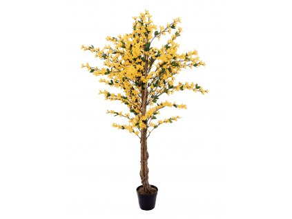 Forsythia se 4 kmeny, žlutá, 150 cm