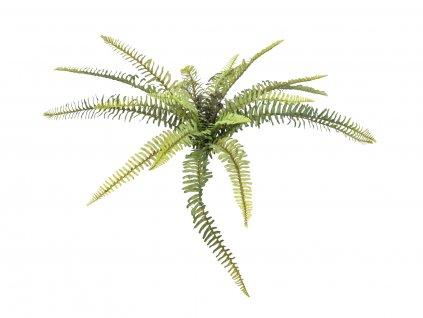 Lesní kapradina, 40 cm