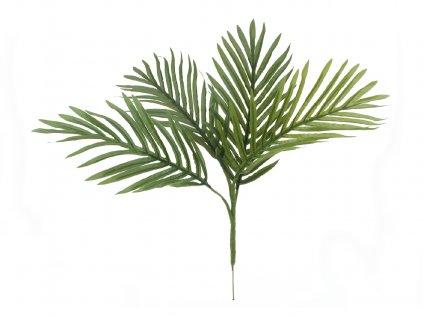 Areca palma větvička, 60 cm