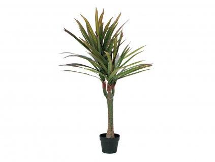 Dracena zeleno-červená, 120 cm