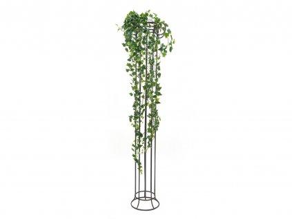Holandský břečťan Premium, 170 cm