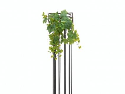 Vinná réva trs, premium, 50cm