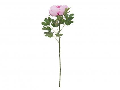 Pivoňka větvička, růžová, 80 cm