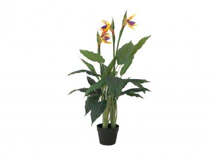 Europalms Rajský květ, 90cm