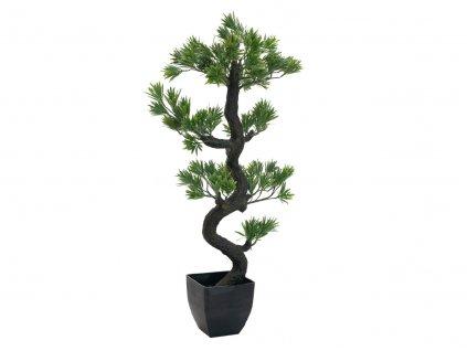 Borovicová bonsai, 95cm