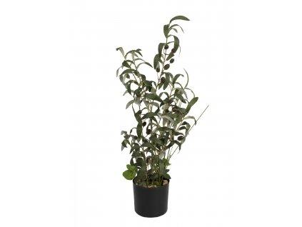 Olivovník s plody, 68 cm