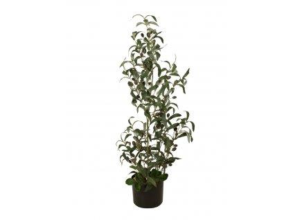 Olivovník s plody, 90 cm