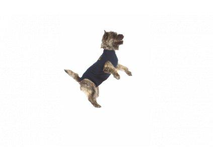 MPS ( S ) Dog
