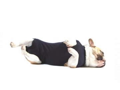 MPS ( S+ ) Dog