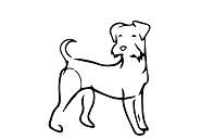 vodítko pro středního psa