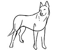vodítko pro velkého psa