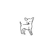 vodítko pro malé psy