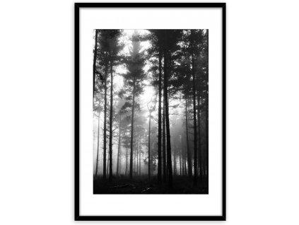 Obraz v rámu FOREST 50x70 cm Styler