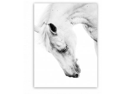 Obraz na plátně HORSE PORTRA 60x80 cm Styler