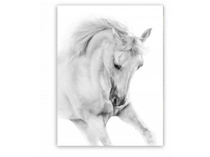 Obraz na plátně WHITE HORSE 60x80 cm Styler