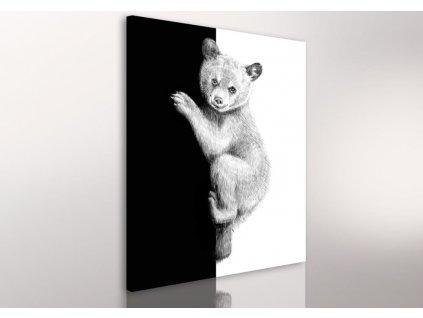 Obraz na plátně TEDDY BEAR různé rozměry Ludesign