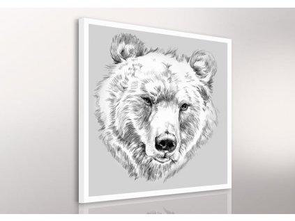 Obraz na plátně BEAR A různé rozměry Ludesign