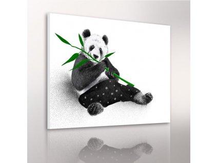 Obraz na plátně PANDA různé rozměry Ludesign