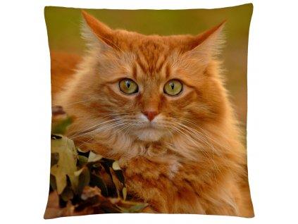 Polštář s motivem kočky 44  Mybesthome 40x40 cm