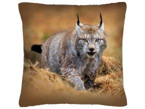 Polštář animal 05 - RYS Mybesthome 40x40 cm