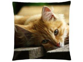 Polštář s motivem kočky 34 Mybesthome 40x40 cm