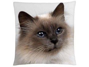 Polštář s motivem kočky 35 Mybesthome 40x40 cm