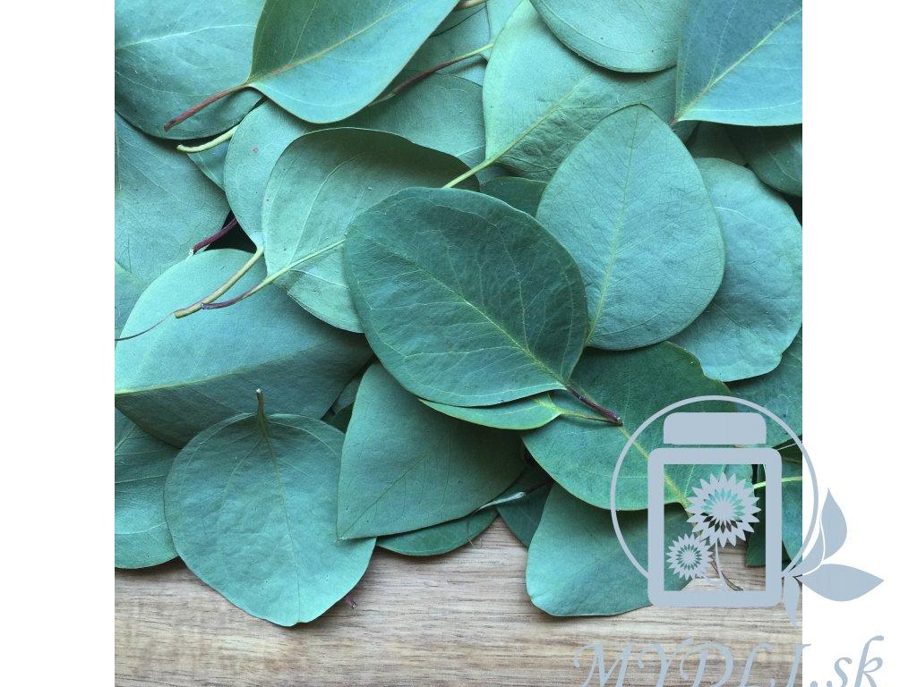 eukalyptus esencialny etericky olej