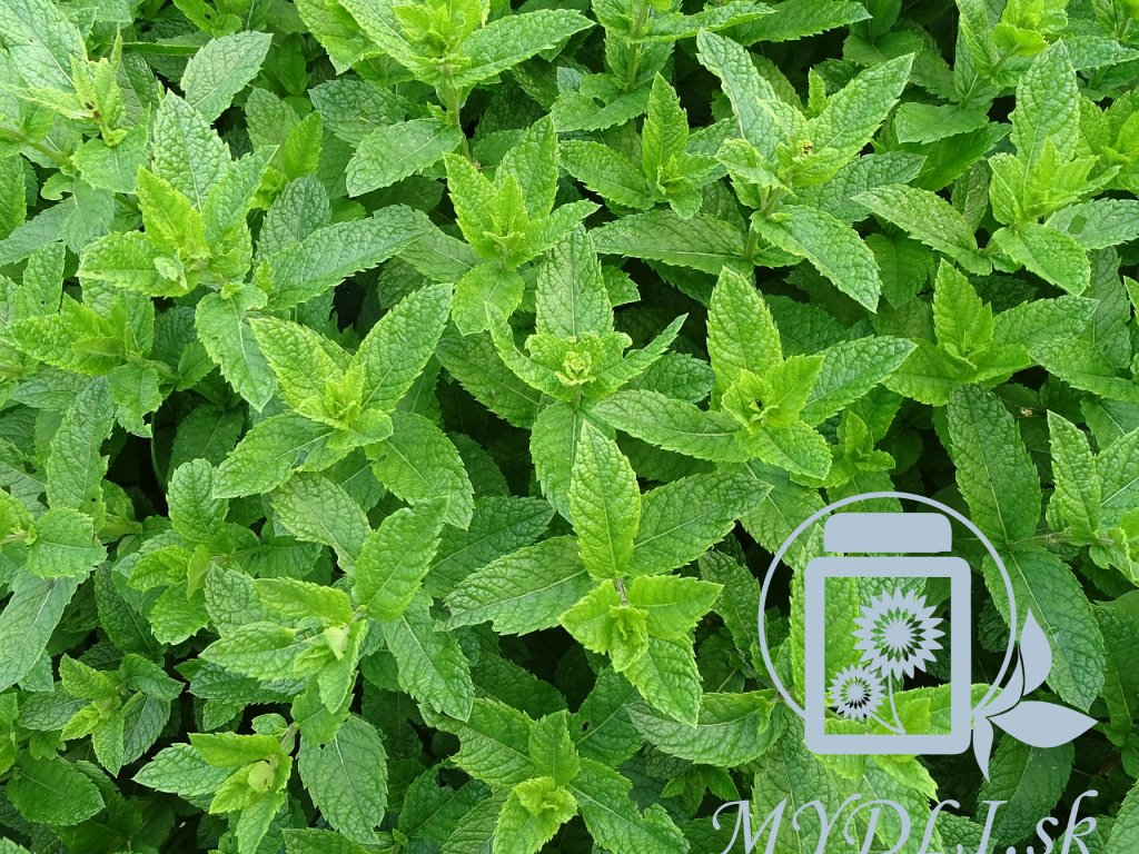 moroccan mint 2396530 1280