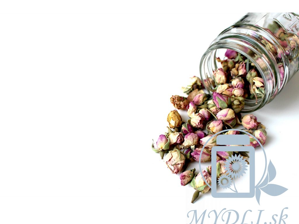 rose 1915441 1920