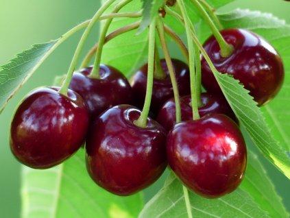 cherry 167341 1280
