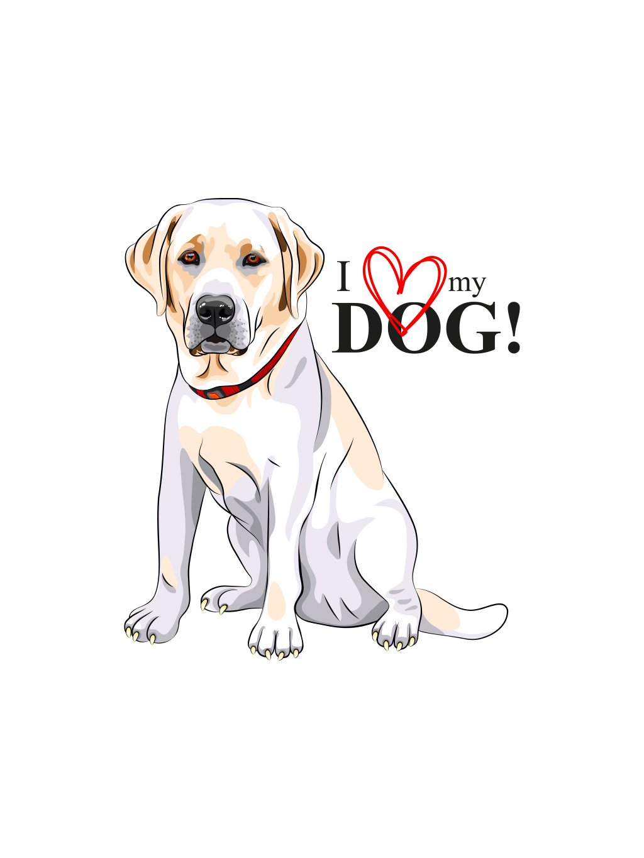 Produktové foto labrador pes